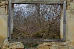 Vista da una finestra di legno di vecchia casa di rovina vicino alla foresta Immagini Stock Libere da Diritti