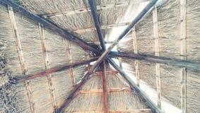 Vista dal basso del baldacchino della foglia della spiaggia fotografia stock libera da diritti