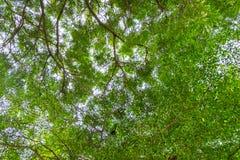 Vista dal basso dell'albero Fotografia Stock Libera da Diritti