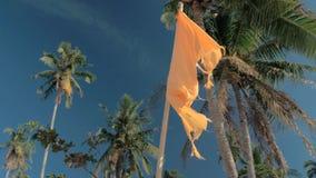Vista dal basso della bandiera in bianco arancio che ondeggia sul vento, foresta degli alberi del cocco sui precedenti Palme cont archivi video