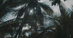 Vista dal basso delle palme con i raggi del sole video d archivio