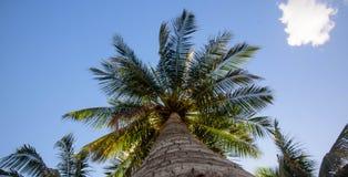 Vista dal basso di bella palma con cielo blu immagine stock