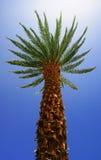 Vista dal basso di una palma Fotografia Stock Libera da Diritti