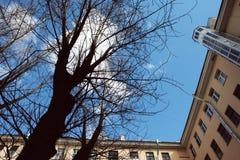 Vista dal basso su un cortile tipico nel vecchio distretto di Pietroburgo Fotografia Stock Libera da Diritti