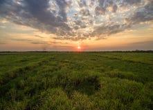 vista dal giacimento della canna da zucchero del fuco con il landscap della natura del cielo di tramonto Immagini Stock Libere da Diritti