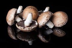 Vista dal lato su pochi funghi Fotografia Stock Libera da Diritti