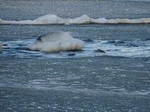 Vista dal nostro arcipelago e dalla sua bella natura di  Fotografia Stock