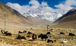 Vista dal plateau tibetano sull'Everest Fotografia Stock Libera da Diritti