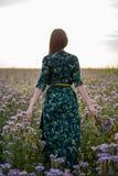 Vista dal retro di una donna castana con un mazzo dei fiori porpora su un giacimento di fiore nel tramonto, libertà, sogni fotografie stock
