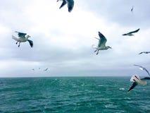 Vista dal traghetto fotografia stock libera da diritti