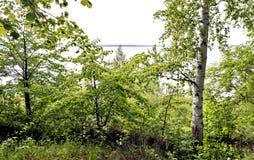 Vista dall'alta Banca alla riva opposta del lago, alberi di betulla verdi nella priorità alta Fotografia Stock Libera da Diritti