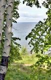 Vista dall'alta Banca alla riva opposta del lago, alberi di betulla verdi nella priorità alta Immagini Stock