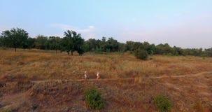 Vista dall'elicottero delle coppie correnti in campagna stock footage