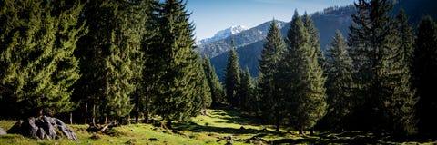 Vista dalla foresta bavarese della montagna alle alpi immagini stock