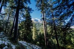 Vista dalla foresta bavarese della montagna alle alpi fotografie stock libere da diritti