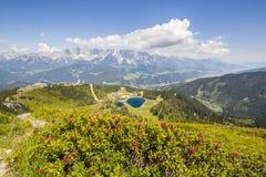 Vista dalla montagna con Alpenrose al lago e dalla montagna Dachstein Fotografia Stock Libera da Diritti