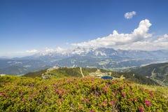 Vista dalla montagna con Alpenrose al lago e dalla montagna Dachstein Immagine Stock