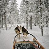Vista dalla slitta tirata da cani Fotografia Stock