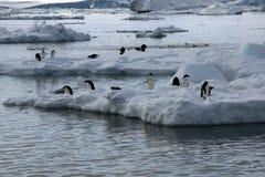 Vista dalla spiaggia dei pinguini del adelie su banchisa fotografie stock libere da diritti