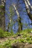 Vista dalla terra della terra degli alberi Fotografia Stock
