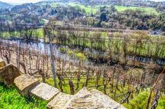 Vista dalla vigna nel River Valley Fotografie Stock Libere da Diritti