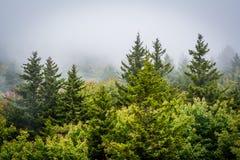 Vista das árvores na névoa da rocha preta, na montanha de primeira geração, i fotografia de stock