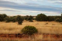 Vista das árvores no campo espanhol Fotos de Stock Royalty Free