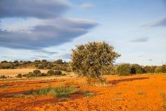 Vista das árvores no campo espanhol Fotografia de Stock Royalty Free