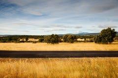 Vista das árvores no campo espanhol Imagem de Stock