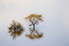 Vista das árvores no lago Nakuru National Park fotografia de stock royalty free