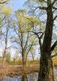 Vista das árvores perto do rio de Dnieper na mola fotografia de stock