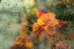 Vista das flores no balcão através do vidro molhado imagens de stock royalty free