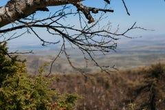 Vista das montanhas à paisagem da floresta Fotografia de Stock Royalty Free