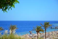 Vista das palmas, da praia, e do Mar Vermelho em Egito Imagens de Stock