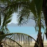 Vista das palmas tropicais da costa dos arbustos Foto de Stock