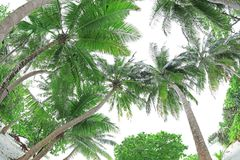 Vista das palmas verdes Fotos de Stock Royalty Free