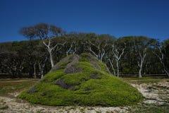 Vista das plantas e das árvores de carvalho verde americano no forte Fisher State Park, NC fotos de stock