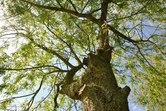 Vista de árbol Fotografía de archivo