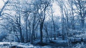 Vista de árbol - azul fotografía de archivo libre de regalías
