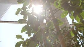 Vista de árbol del limón almacen de video