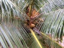 Vista de árbol hermosa del coco Imagen de archivo libre de regalías