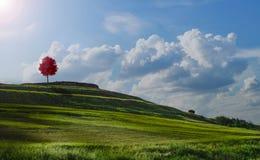Vista de árbol roja en la colina cubierta con verdor foto de archivo