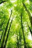 Vista de árboles Imágenes de archivo libres de regalías