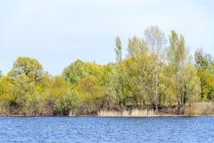 Vista de árboles cerca del río de Dnieper Imagen de archivo