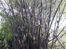 Vista de árvores de bambu belamente secadas imagens de stock