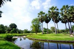 Vista de árvores verdes no parque Fotografia de Stock Royalty Free