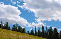 Vista de abetos en una cuesta en las montañas rocosas imagenes de archivo