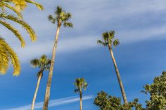 Vista de algunas palmeras en un día de verano maravilloso imagen de archivo