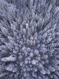 Vista de arriba de árboles nevados en el desierto en invierno imagen de archivo libre de regalías