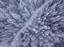 Vista de arriba de árboles nevados y del camino nevado en imagenes de archivo